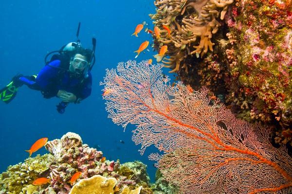 Rarotonga diving