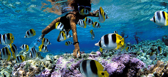 Snorkelling the pristine waters of Bora Bora