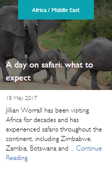A day on safari: what to expect