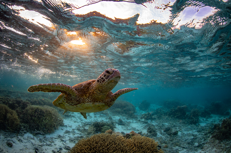 Help protect the oceans, the reef and marine animals by using reef safe, biodegradable sunscreen