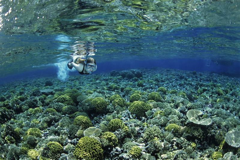 Snorkelling is a must do activity in PNG.