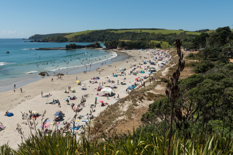 A busy summer day at Anchor Bay in Tawharanui Regional Park