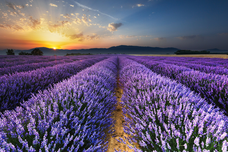 Provence at sunrise. Credit: Flickr.com/Loïc Legarde.