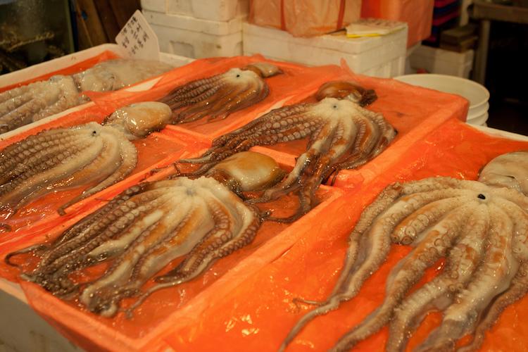 Octopus at Noryangjin fish market, Seoul. Credit: Jirka Matousek/Flickr.com