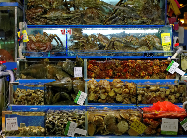 Tanks at Noryangjin fish market, Seoul. Credit: tongeron91/Flickr.com