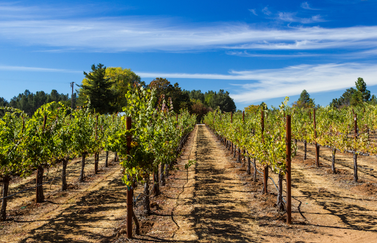 Sonoma vineyards. Photo: iStock.com.