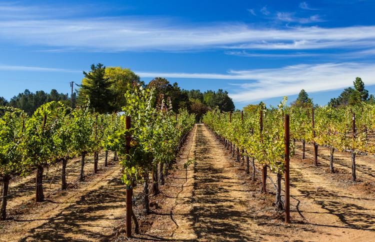 Sonoma vineyards. Photo: iStock.com.