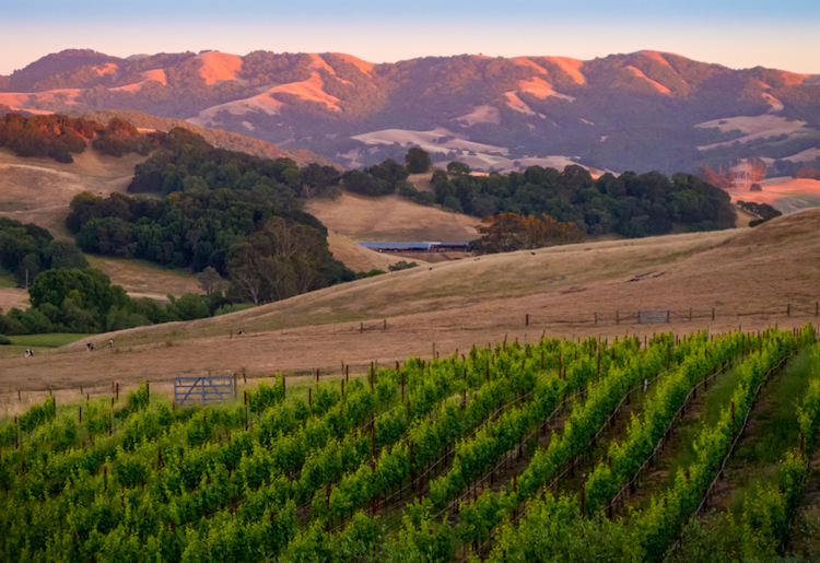 The coastal hills near Petaluma, Sonoma. Photo: iStock.com.