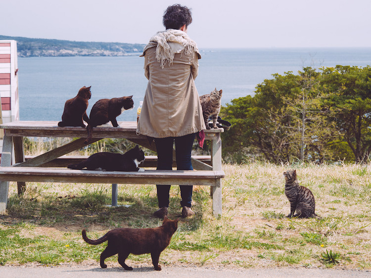 Tashirojima cat island. Credit: flickr.com