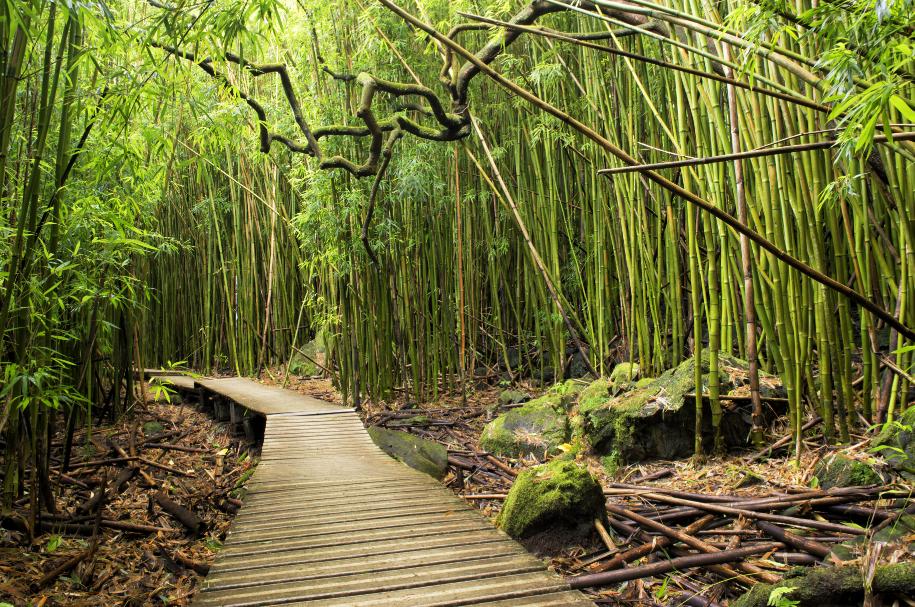 Bamboo forest, hawaii