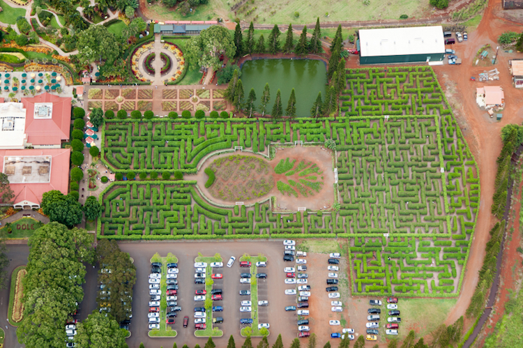 An aerial view of the maze at Dole Plantation, Oahu. Credit: iStock.com