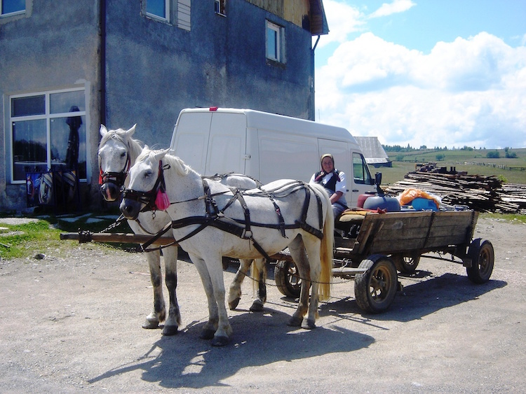 In rural Romania, horse drawn transport is the norm. Photo: Diana Noonan