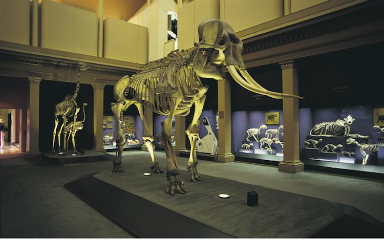 The Australian Museum. Photo: Destination NSW