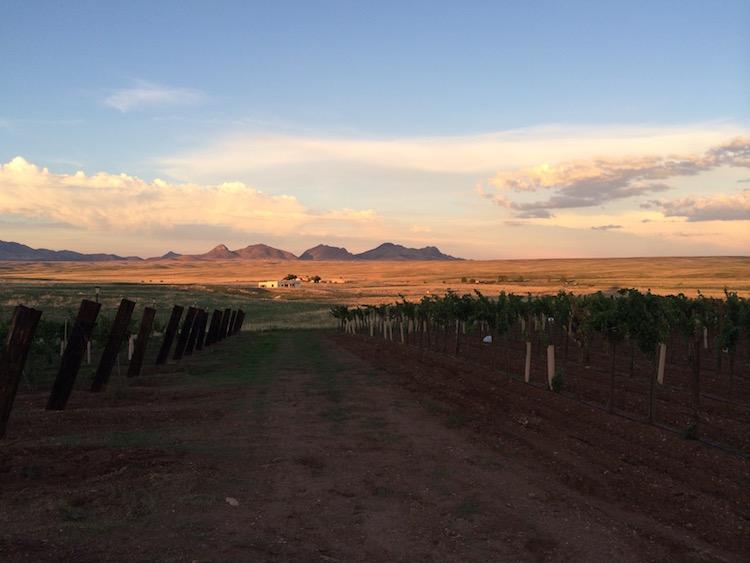 Arizona Hops & Vines vineyard, Sonoita. Photo: Sarah Illingworth