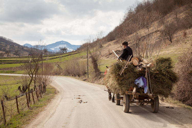 Farmer carrying hay on his cart, Sieu, Maramures, Romania.