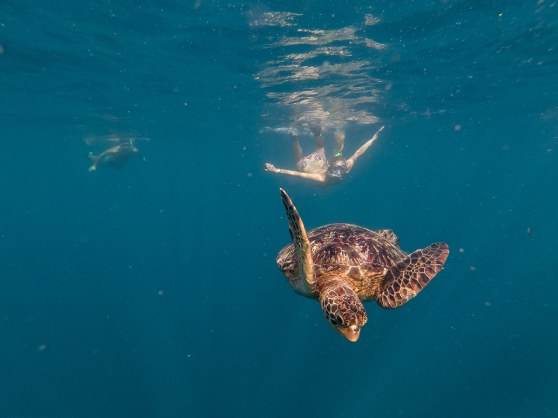 Snorkelling by a turtle in Samoa
