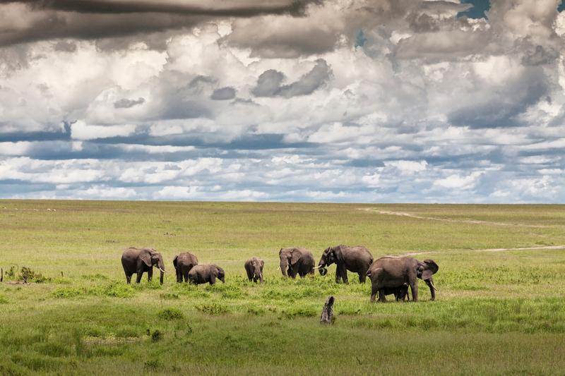 Elephants in Serengeti National Park, Africa