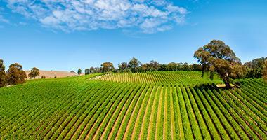 The Barossa Vineyards