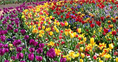 Floriade Flower Festival