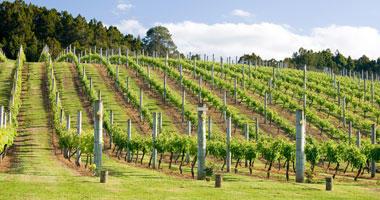Winery on Waiheke Island
