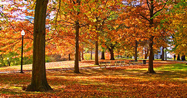 Spectacular Fall Foliage