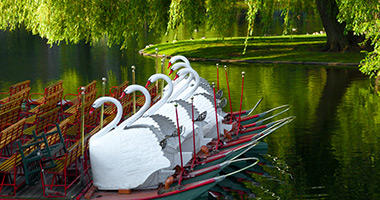 Swan Boats, Boston Public Garden