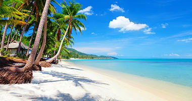 Paradise With Coconut Palms