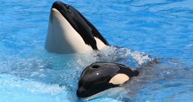 SeaWorld 'Shamu' Show