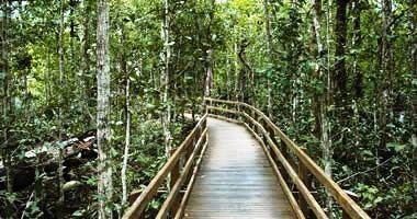 Daintree Rainforest Boardwalk