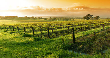 Yarra Valley Vineyards