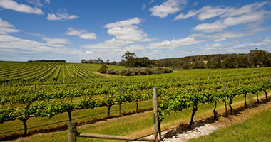 Margaret River Vineyards
