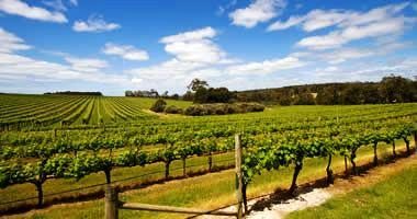 Margaret River wine region