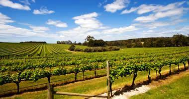 Margaret River wine region