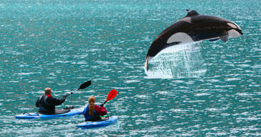 Kayak with the Whales