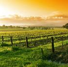 Vineyard, Yarra Valley