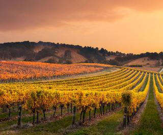 Vineyards in the Barossa Valley, South Australia