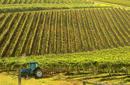 Vineyard, Hunter Valley