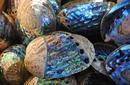 Paua shells, Kaikoura   by Flight Centre's Katrina Imbruglia