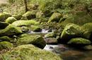 Daintree Rainforest | by Flight Centre's Stephen Bullock
