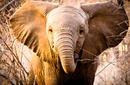 Elephant, Kruger National Park | by Flight Centre's Stephen Bullock