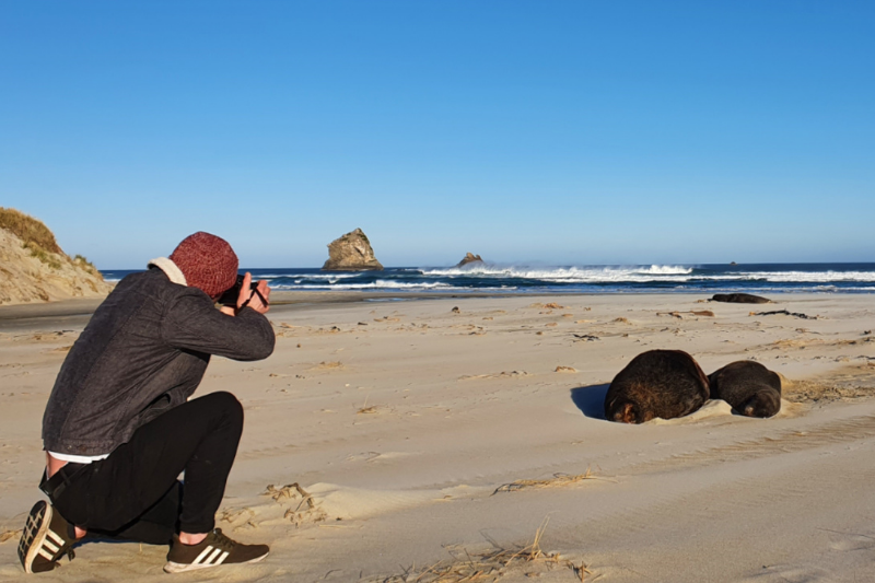Sea Lions taking their afternoon naps on Sandfly Bay